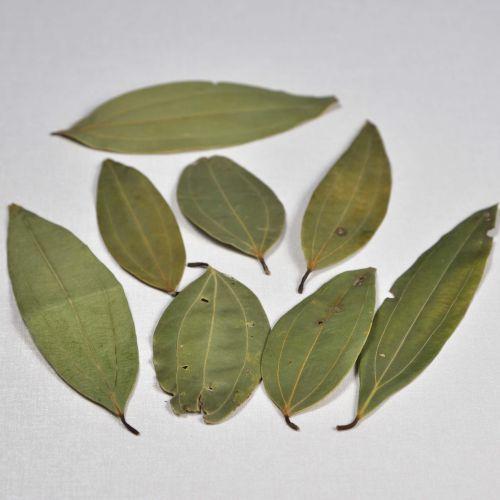 Bay Leaf (Tej pata)