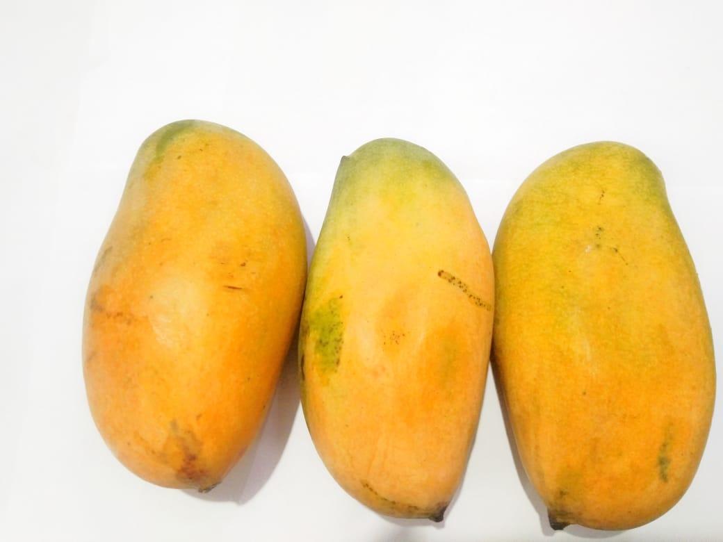 Mango Mallika (Semi Ripe)