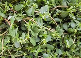 Kulfa Leaves (Purslane)