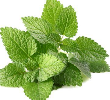 Mint - (Pudina Leaves)