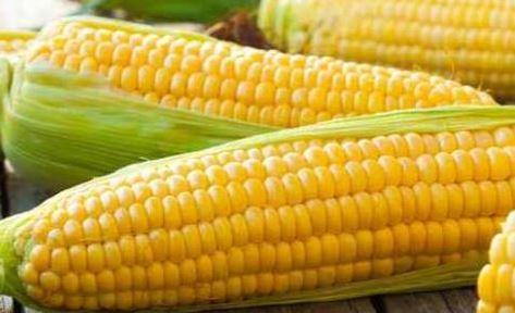 Makki (Corn with Cob)