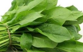 Spinach (Palak)