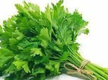 Coriander Leaves - Not so Fresh Looking